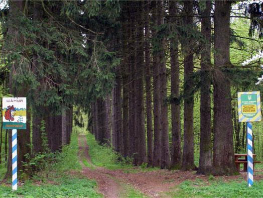 лес в Мезинском парке