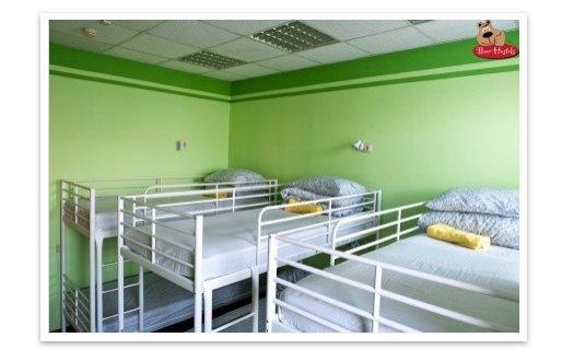 Bear Hostels - уютный хостел (гостиница)